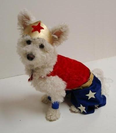 Dog Costume Wonder Woman Easy to Make Wonder Woman Dog