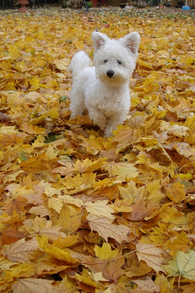 Niqqi loves fall