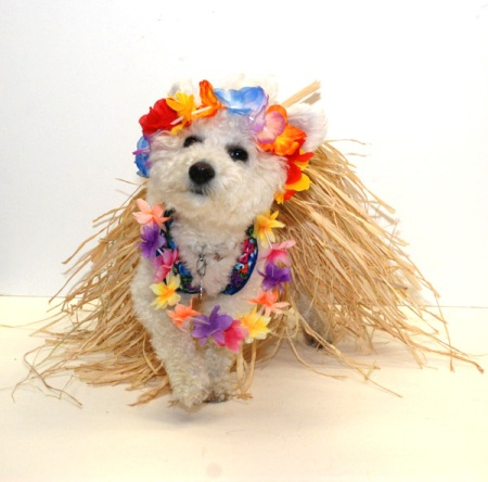 Niqqi's Hawaiian Hula Dancing Costume