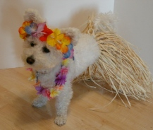 Niqqi tries on her Hawaiian hula dress costume.