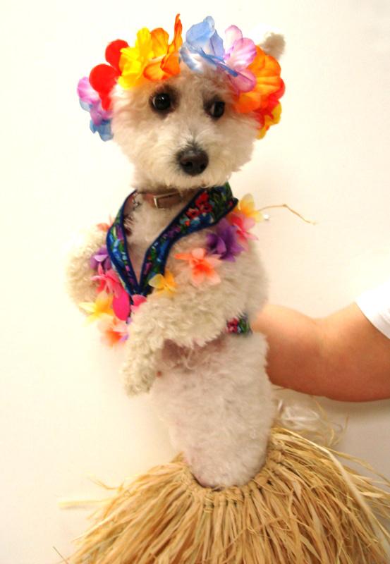 Esta es Niqqi en su traje de bailarina Hawaiana.