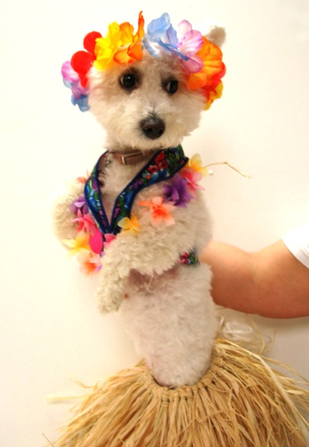 This is Niqqi in her Hawaiian hula dancer costume.