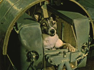 This is Laika, the first dog to orbit the Earth