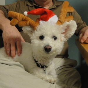 Niqqi hopes to join the Santa Team and help delivery presents on Christmas.  She also tells us a Santa story.
